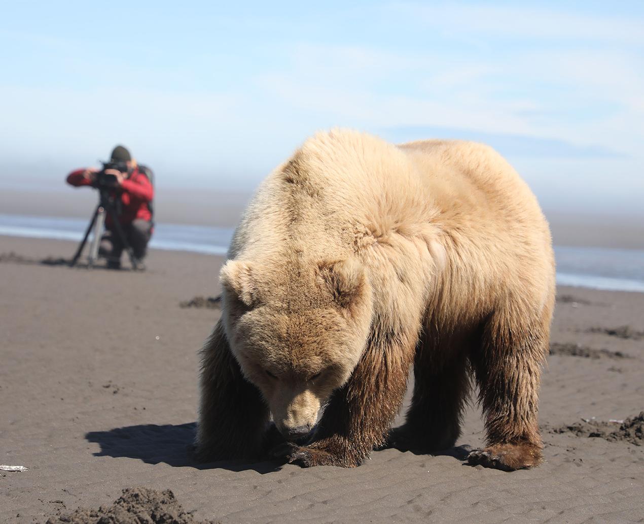 Auf Muschelsuche bei Ebbe, Lake Clark Nationalpark, Alaska 2018 © Lea Goldberg